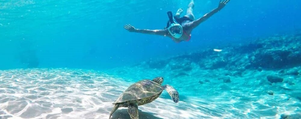 Dive & Snorkel the Great Barrier Reef All Year Round