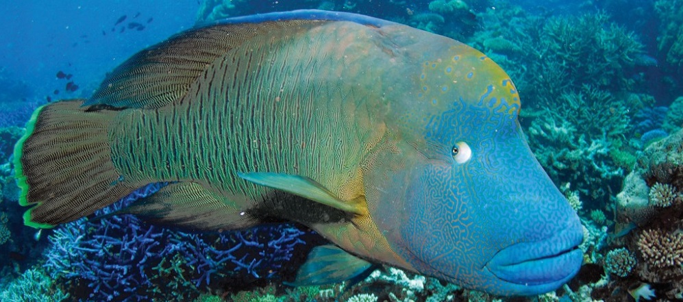 Marine Life In The Great Barrier Reef