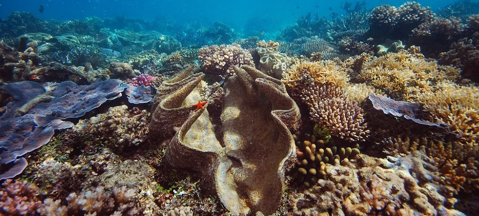 Breaking Patches on The Great Barrier Reef