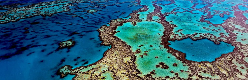 Exploring The Wild and Mesmerising Outer Reef
