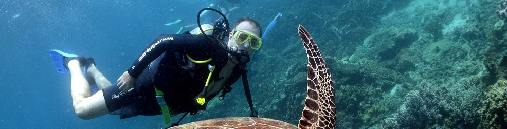Snorkelling and diving the Great Barrier Reef