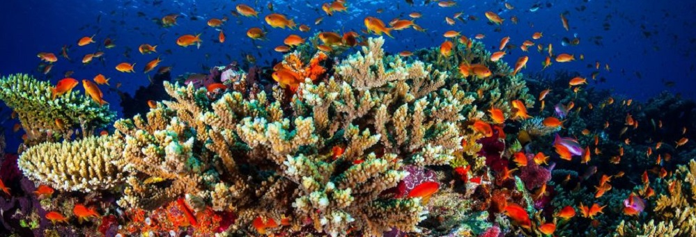 The Corals of the Great Barrier Reef