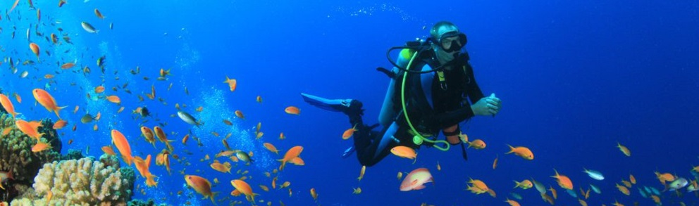 Scuba Diving and Snorkelling at Norman Reef
