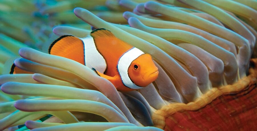 Great Barrier Reef Tour Nemo