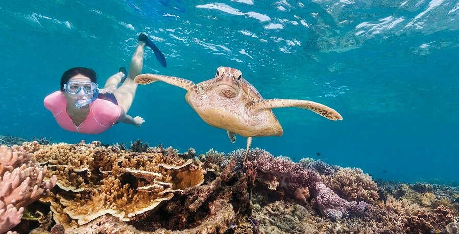Great Barrier Reef Tour Turtle