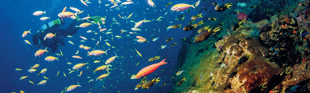 Diving and Snorkelling at Hastings Reef