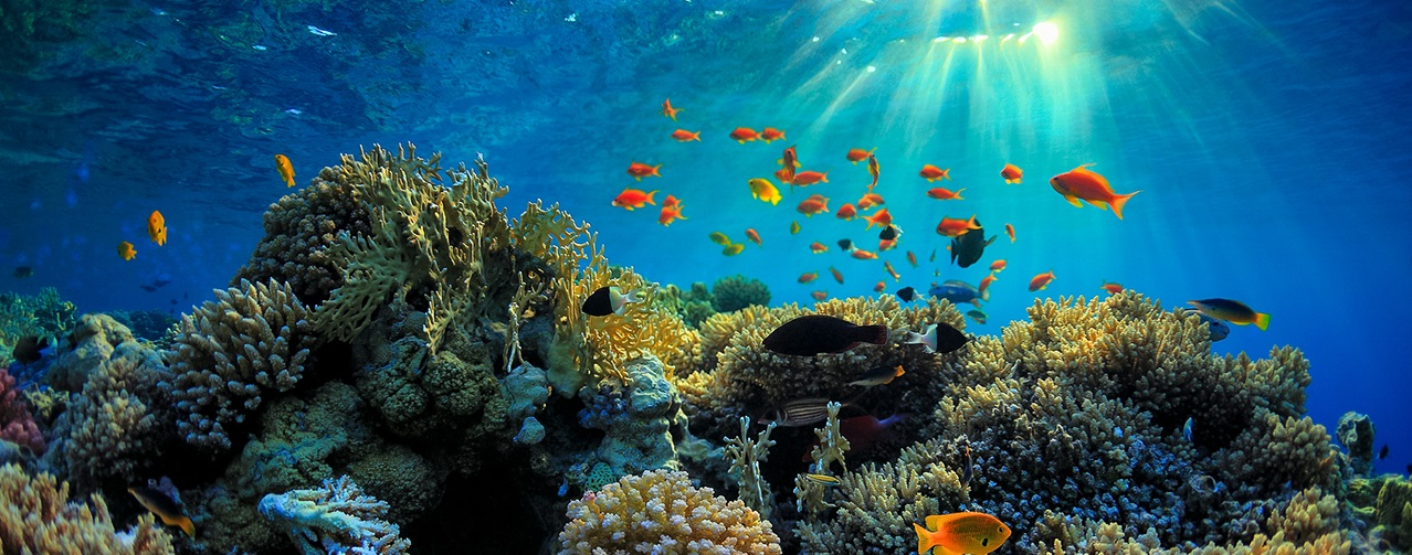 Explore The Marine Life In The Great Barrier Reef