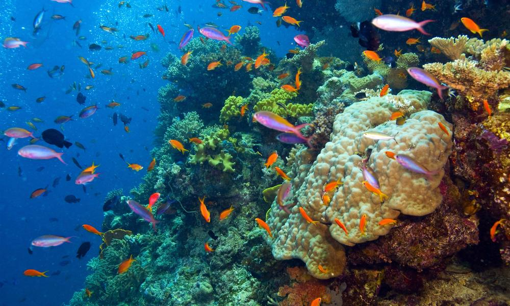 How to Explore the Outer Reef of the Great Barrier Reef