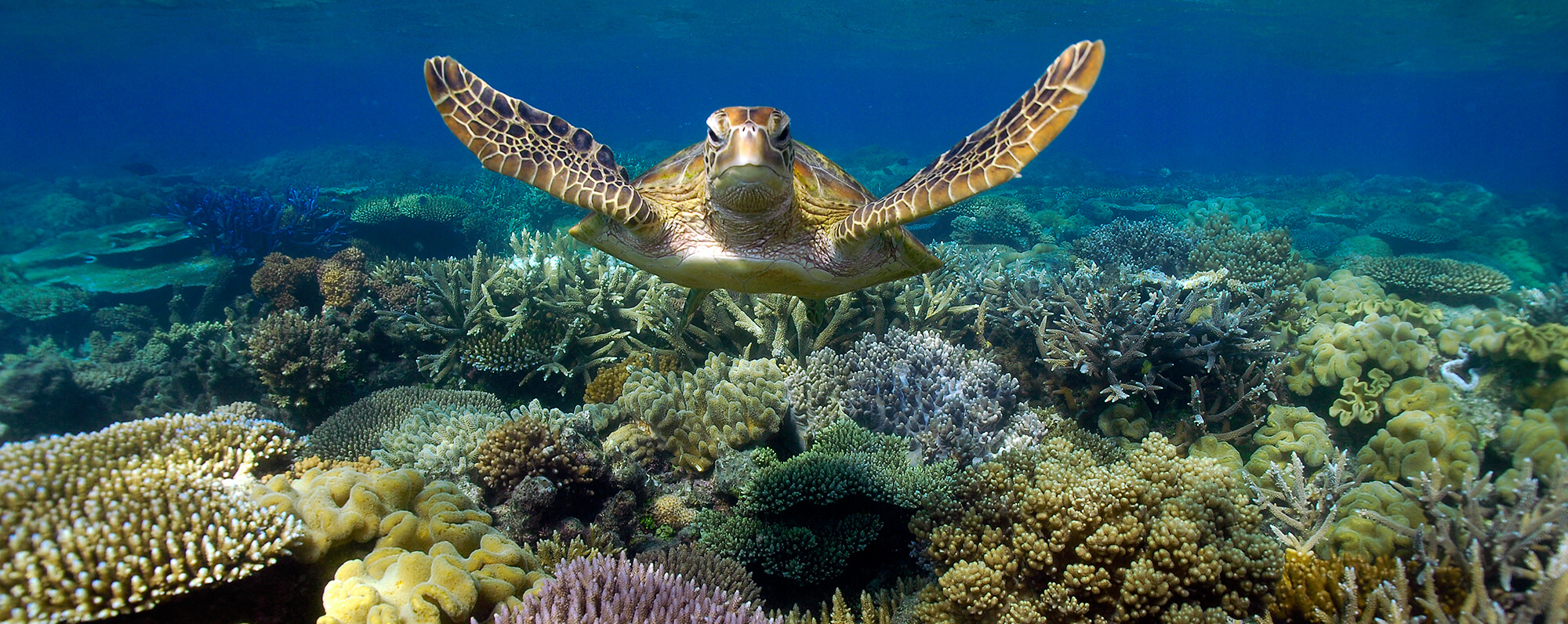 How to save the Great Barrier Reef?
