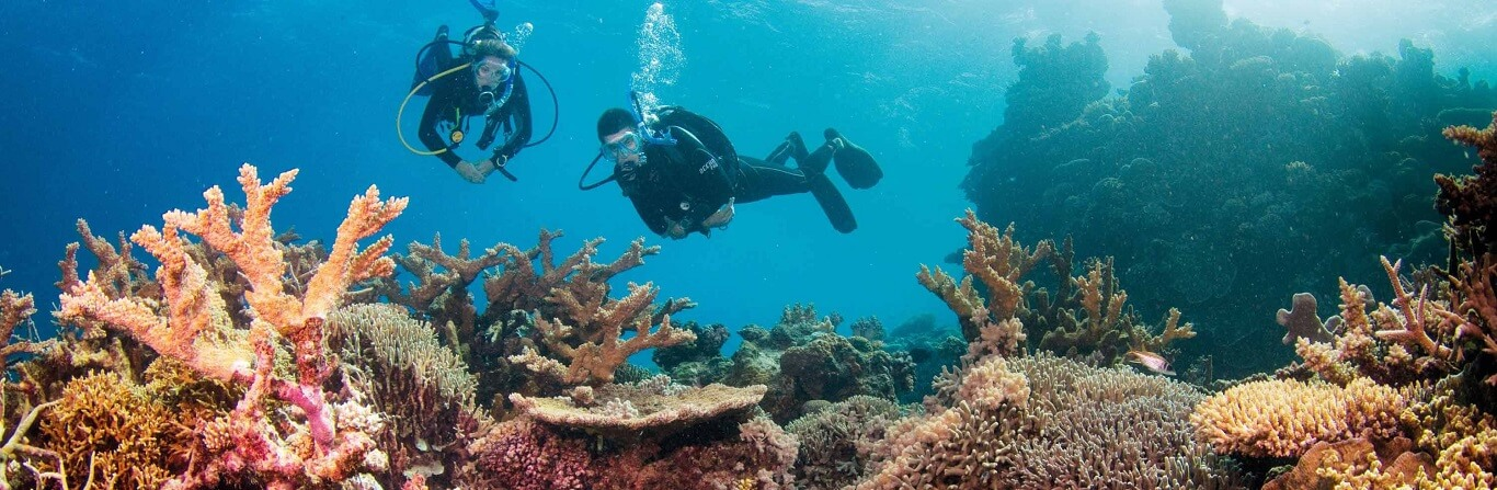 How does Sunscreen Damage the Reef?