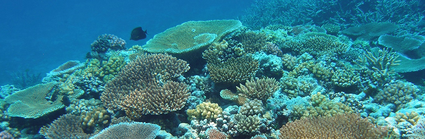 Which is the best reef in Great Barrier Reef?