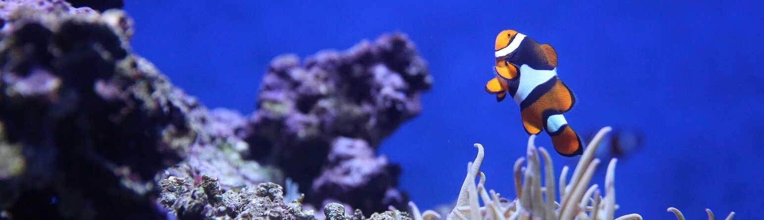 The Great Barrier Reef is not Dead