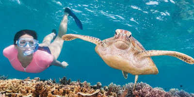 Great Barrier Reef Premium Snorkelling Tour $189