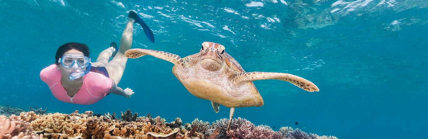Great Barrier Reef Premium Snorkelling Tour $189