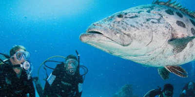 2 Day Great Barrier Reef Liveaboard Tour $440