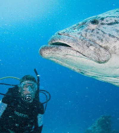 2 Day Great Barrier Reef Liveaboard Tour $460
