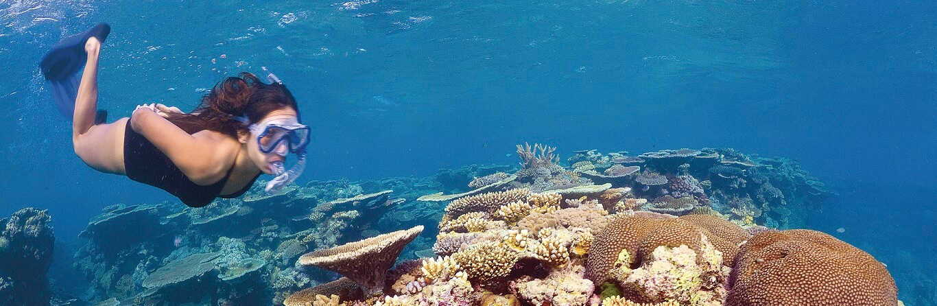 3 Day Great Barrier Reef Liveaboard Tour $660