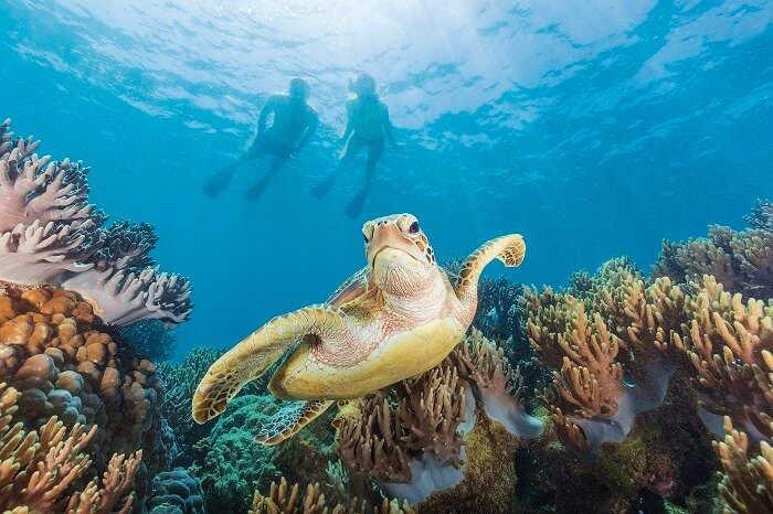 cairns scuba diving