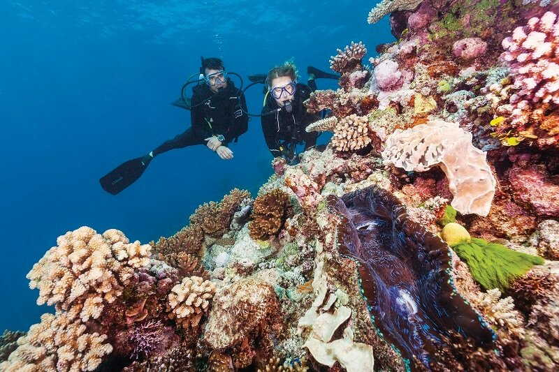 scuba diving at agincourt reef
