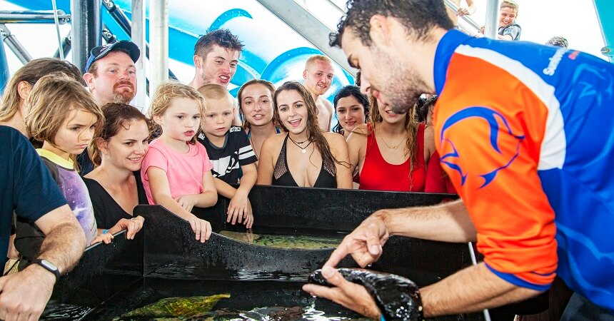 touch tank at moore reef