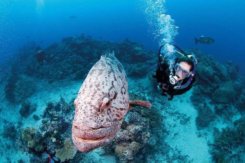 wildlife great barrier reef
