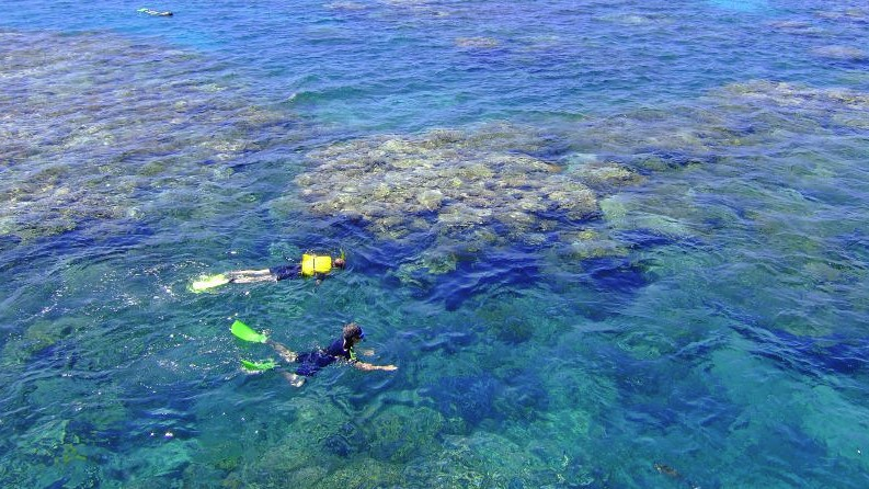 A Guide to Snorkelling the Great Barrier Reef for Non-Swimmers