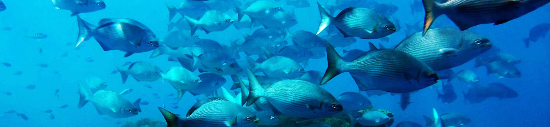 What animals are in the Great Barrier Reef?