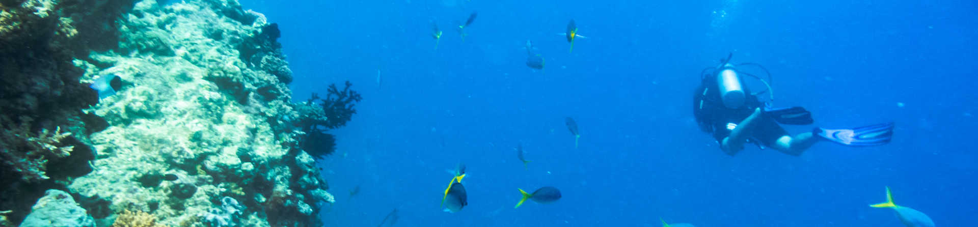 Is it better to dive or snorkel the Great Barrier Reef?