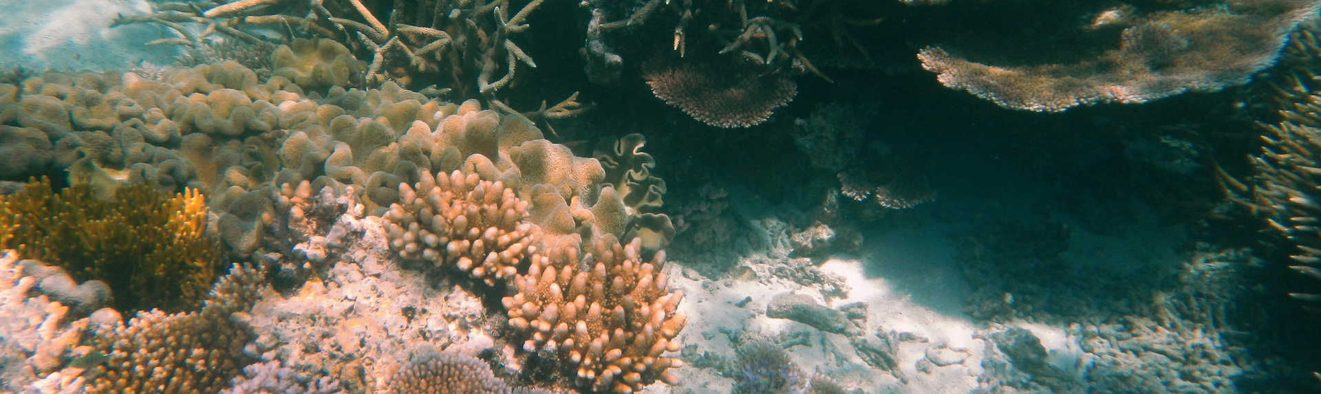 What is the best month to visit the Great Barrier Reef?