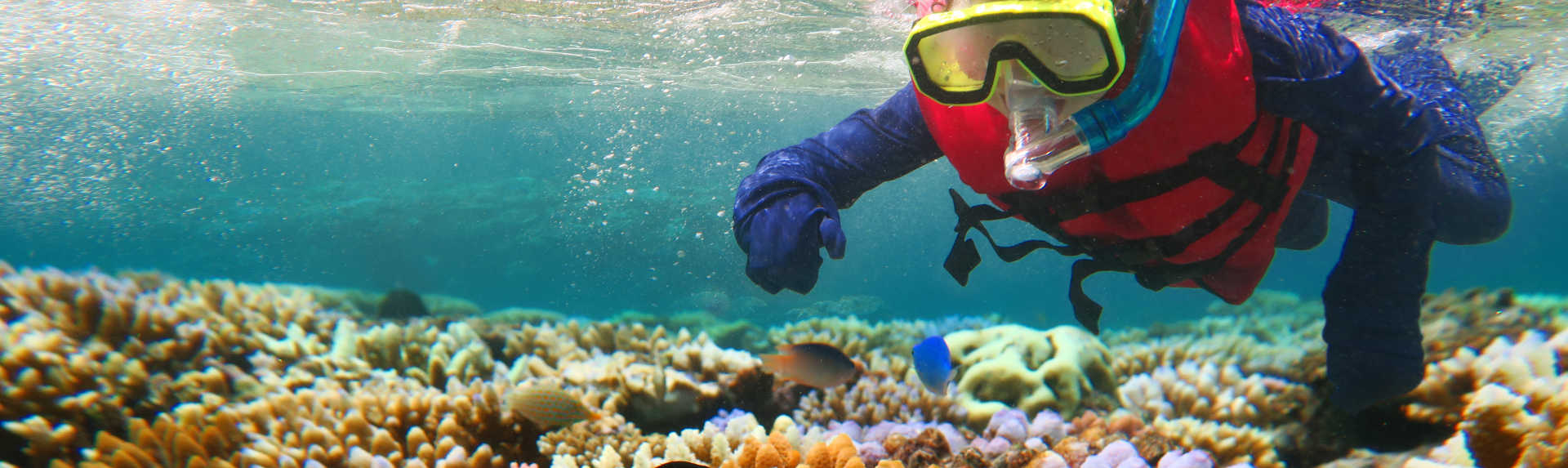 Is it safe to snorkel the Great Barrier Reef?